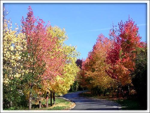 Boje jeseni 1