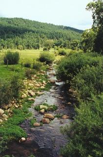 Creek near Heber, Arizona