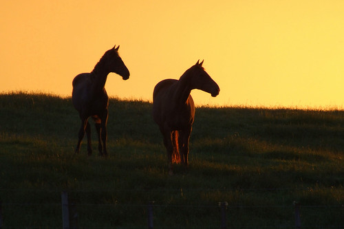 sunset horses | by EssjayNZ