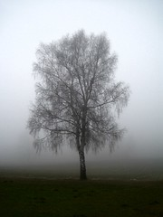 suicidal fog tree | by chepedaja