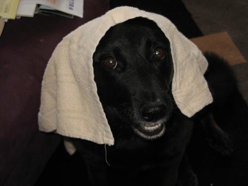 Towel Head