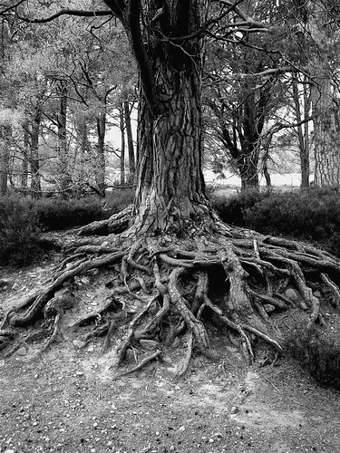 Tree Roots | by SarahPetersPhotography
