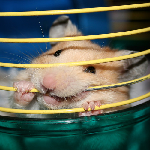 Hamster cage | by Ady Kyte