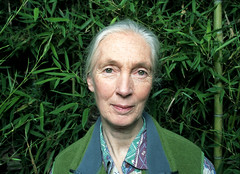 Jane Goodall | by Christofer C. Dierdorff