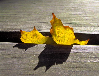 Yellow leaf | by ~My aim is true~