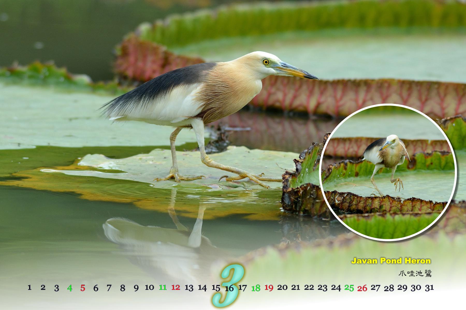 Thai Bird Calendar 2017_03