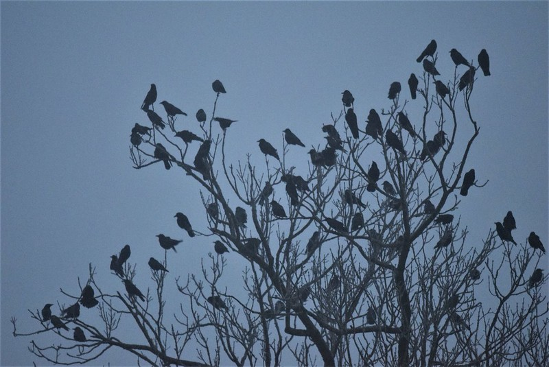Crows 17.12 (5)