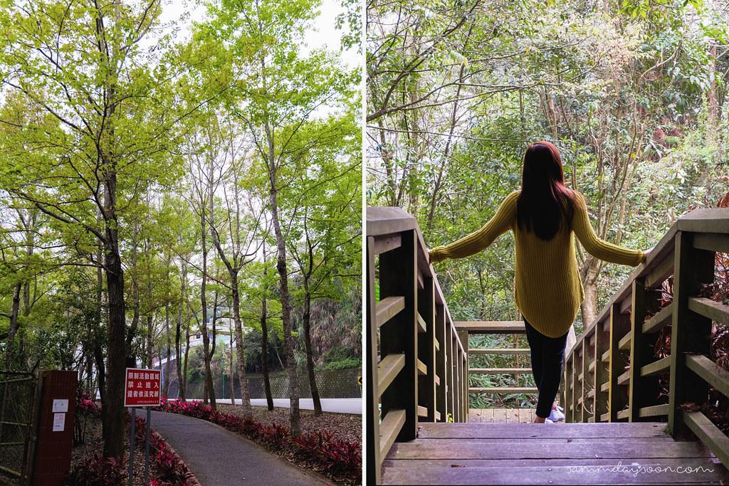 sun-moon-lake-trees
