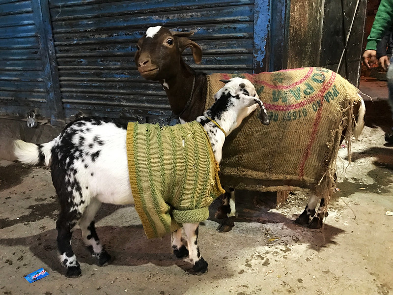 City Life - Cold Goats Wear Prada, Walled City