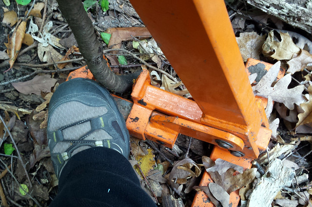 a shoe holding down a buckthorn removal tool that has a small trunk