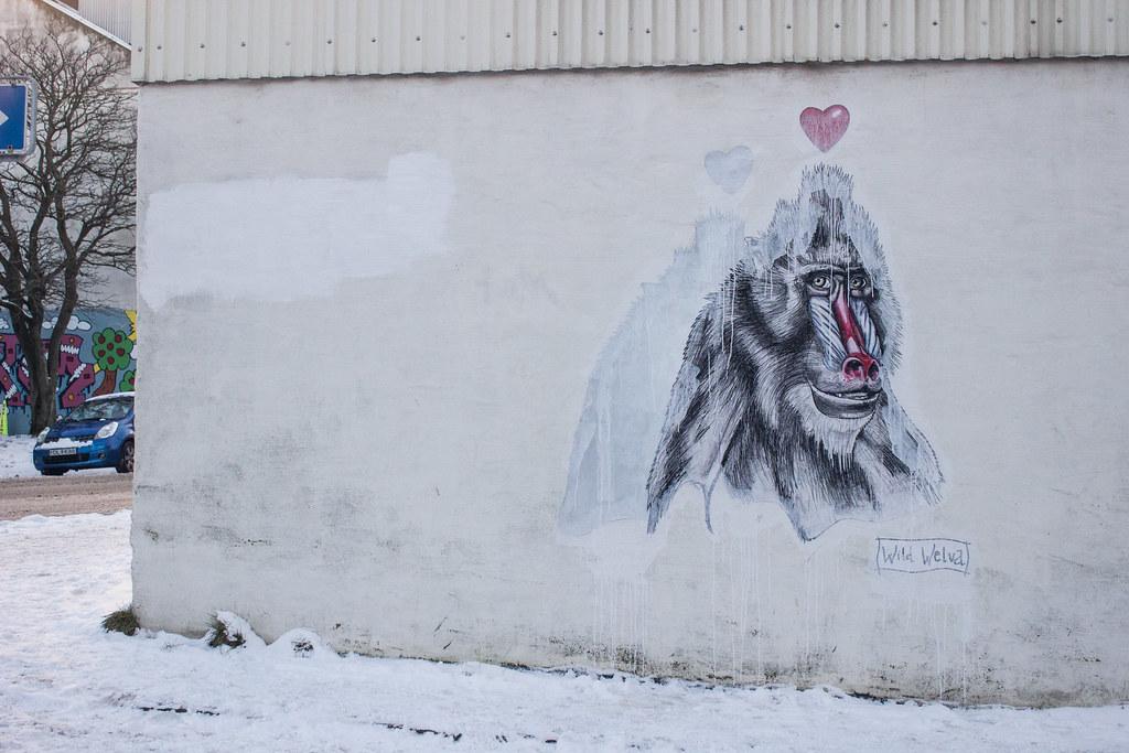 Wild Welva Reykjavik