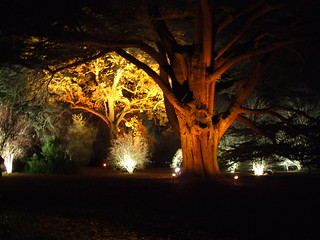 Westonbirt Arboretum by night | by The PriMe
