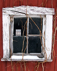 window | by Aunt Owwee