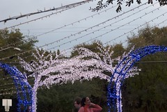 Holiday Light Gate