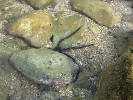 banyak biota laut yang terlihat jelas