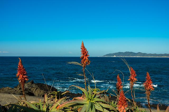 アロエの花と海と空