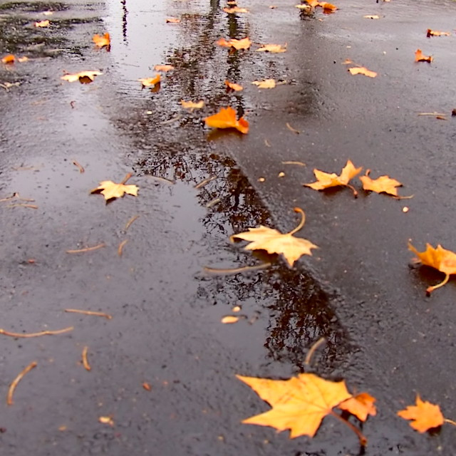 Leaves in Street