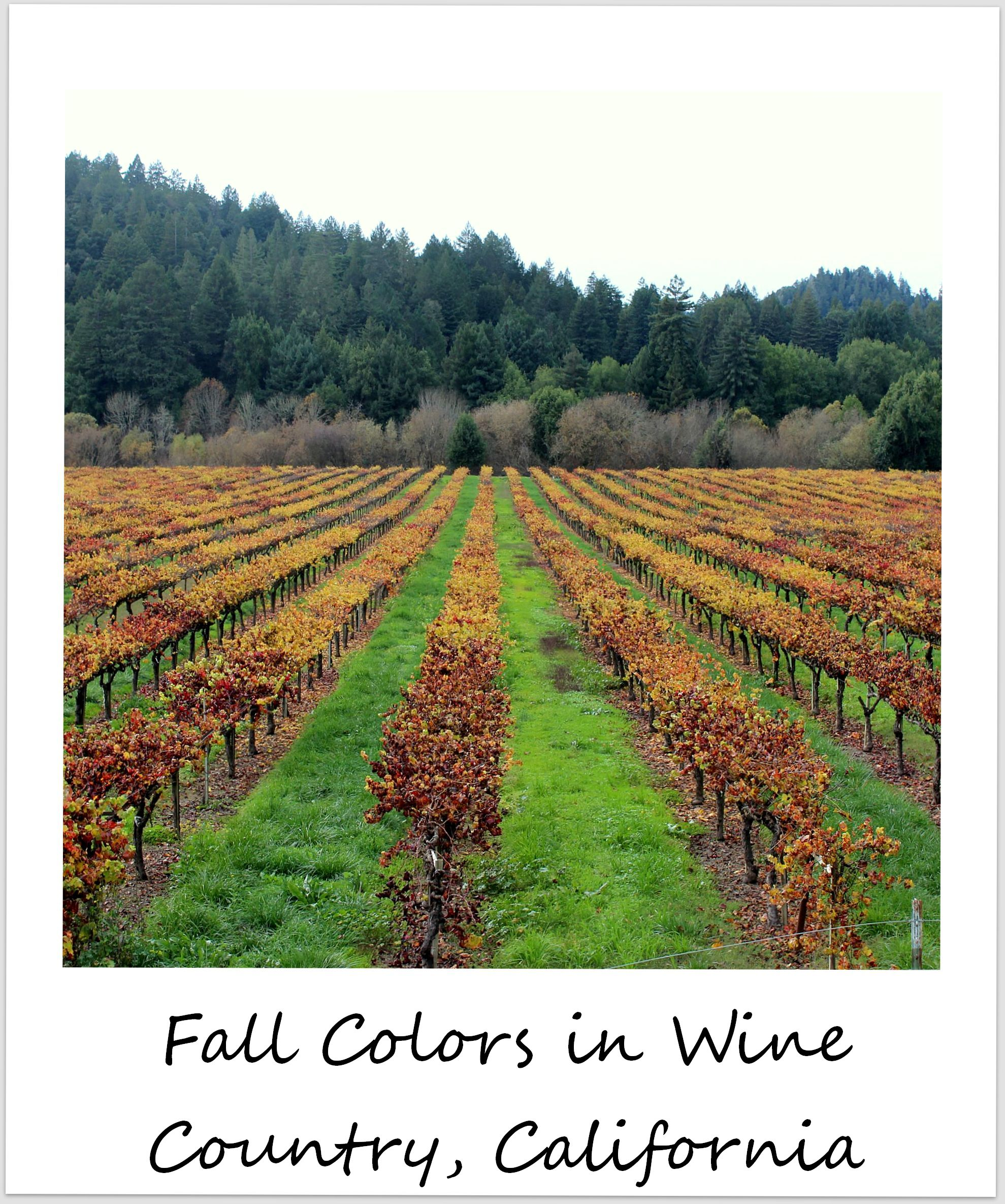 polaroid of the week usa california sonoma wine country