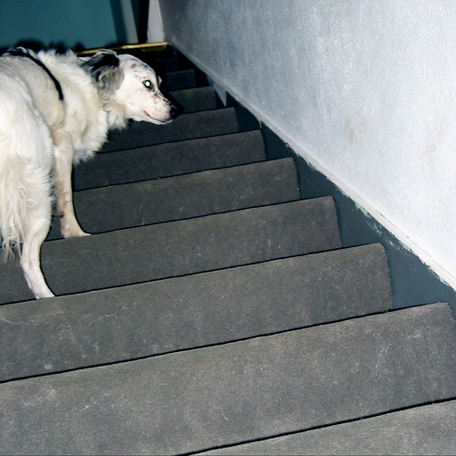 Stairs For Pets To Bunk Bed