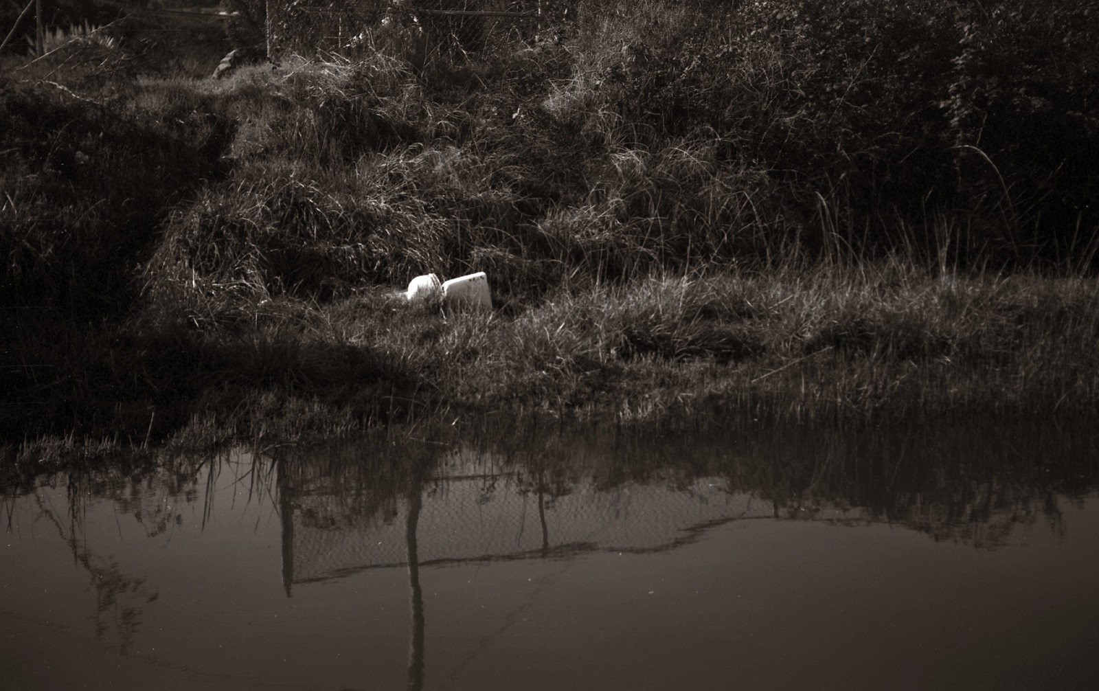 Estuary | by efo