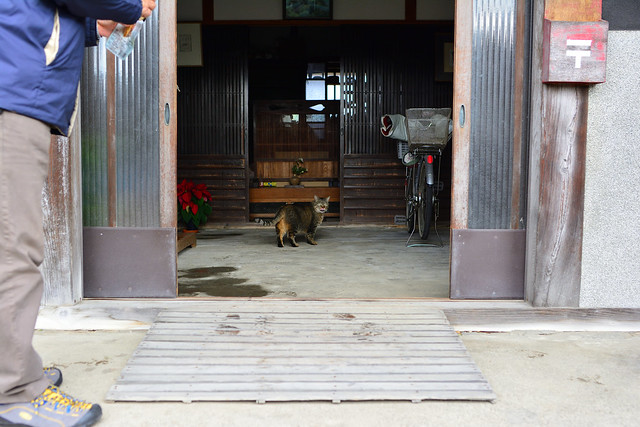 民家の玄関でたたずむネコの写真