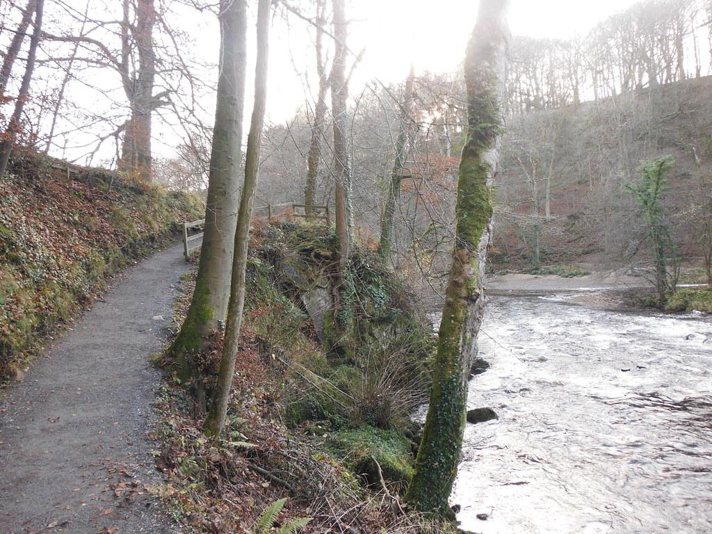 Strid Wood 6