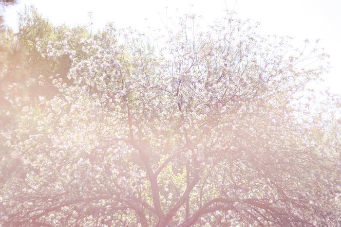 Apple tree 2010