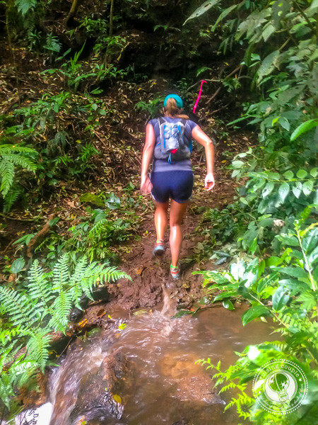 Trail during the Moon Run in Monteverde, Costa Rica
