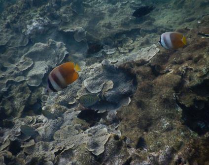 ikan di pulau oar