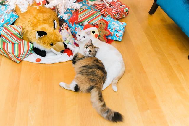 Christmas Kitties.