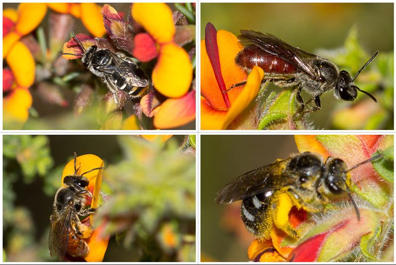 4_bees_on_peas