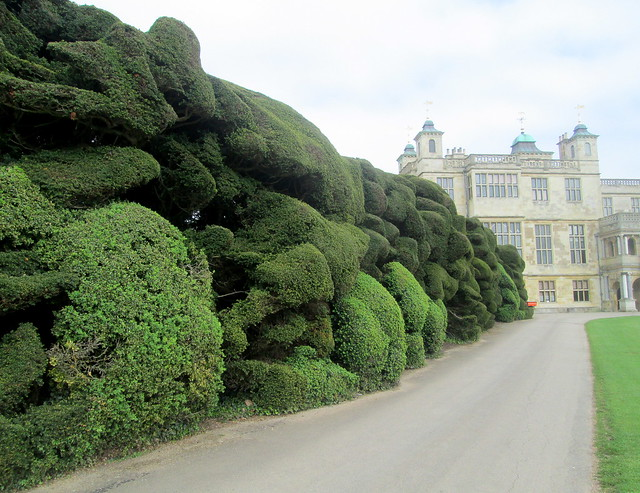Hedge, Audley End