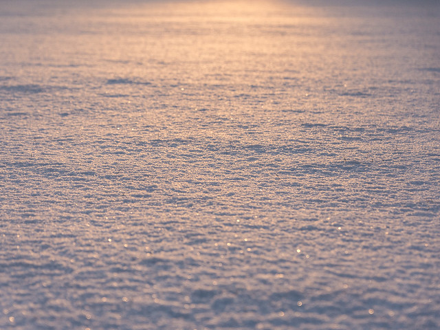 low sun on snow