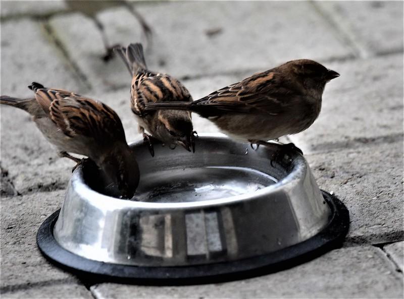 Sparrows 15.12 (1)