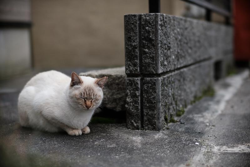 Stray cat (my friend)