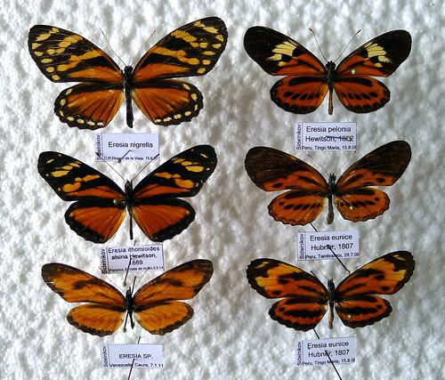 Batesian and Müllerian mimicry
