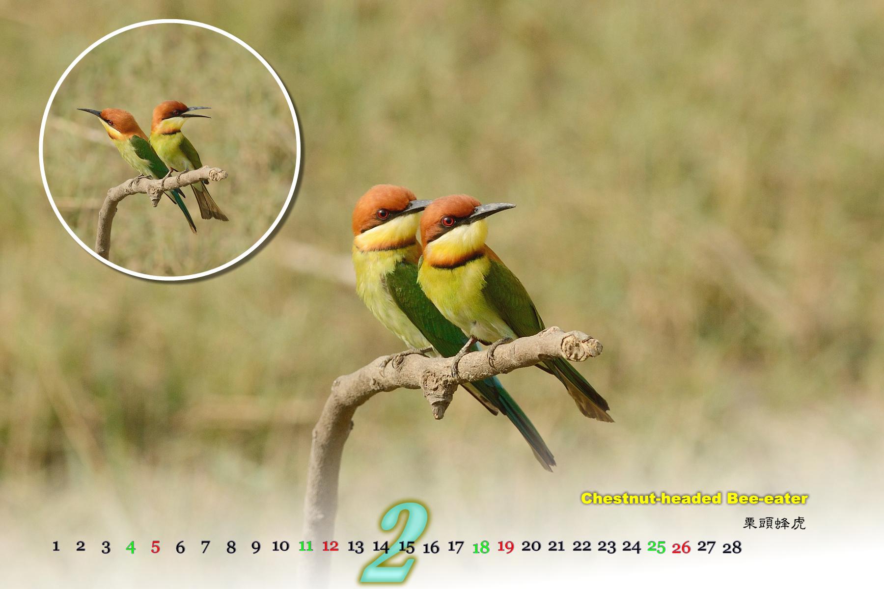 Thai Bird Calendar 2017_02