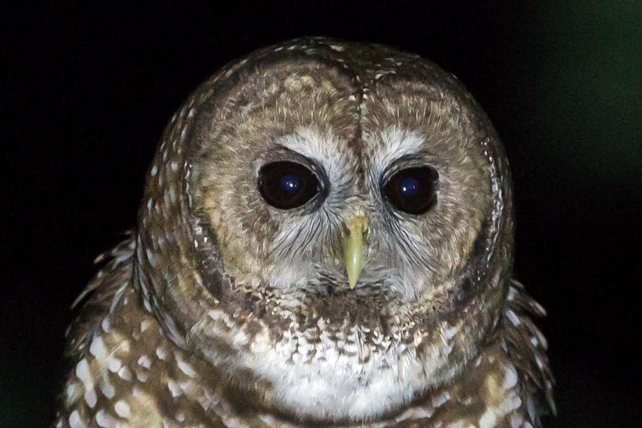 051416_owl19