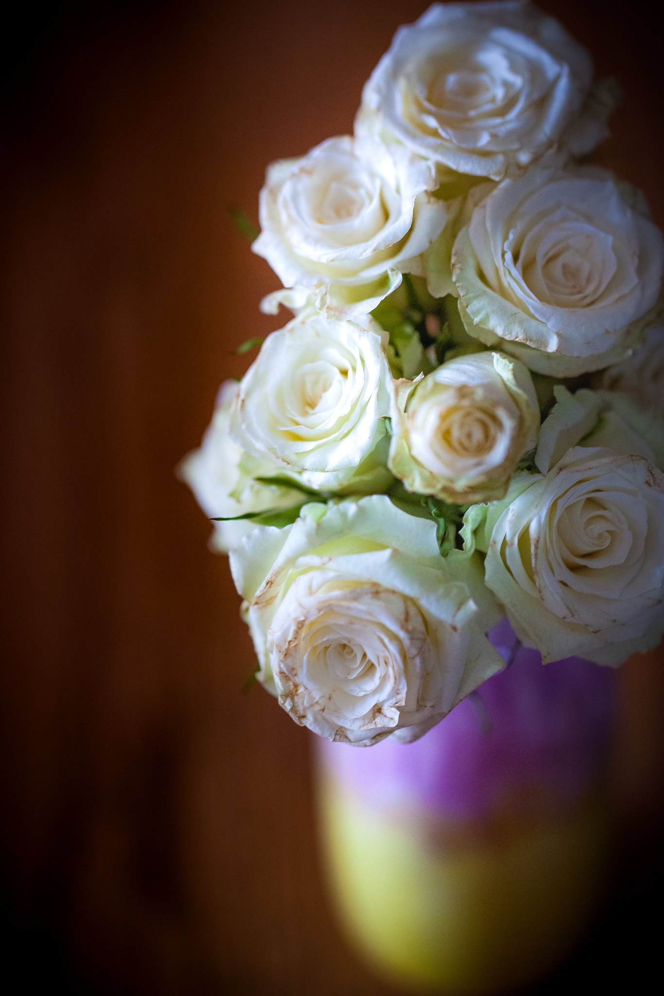 (366/366) New Year's Roses