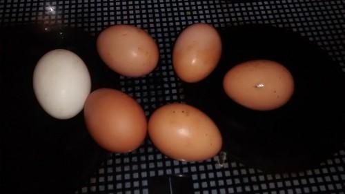 eggs Jan 17