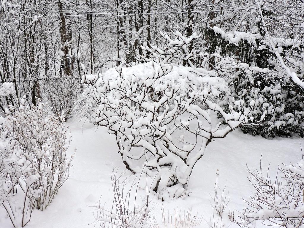 Nouvelle neige