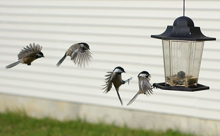 Landing Sequence | by Kaddy