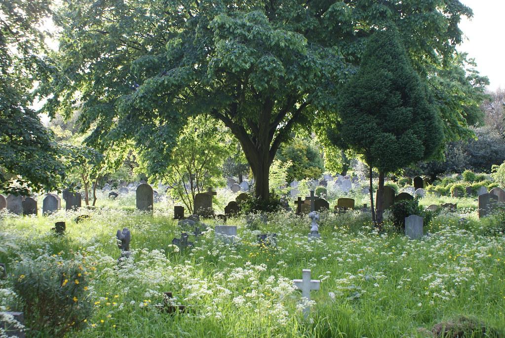 Tombes éparses entourées de fleurs sous un grand arbre au Brompton cemetery de Londres.