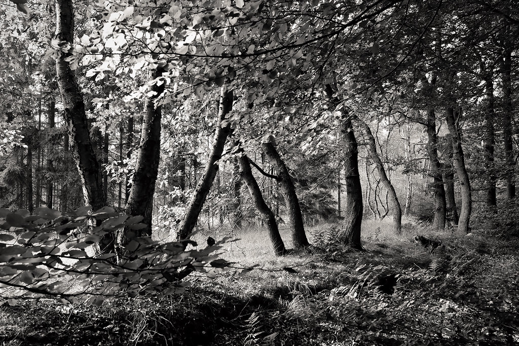 Monochrome trees