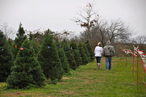 12-2016 Christmas Tree Hunting