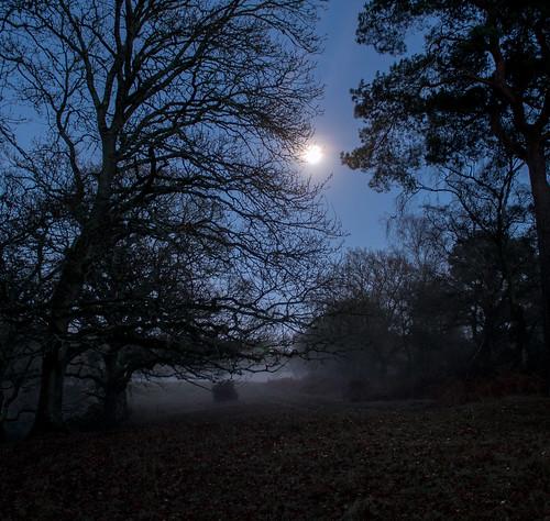 Moonlight & mist