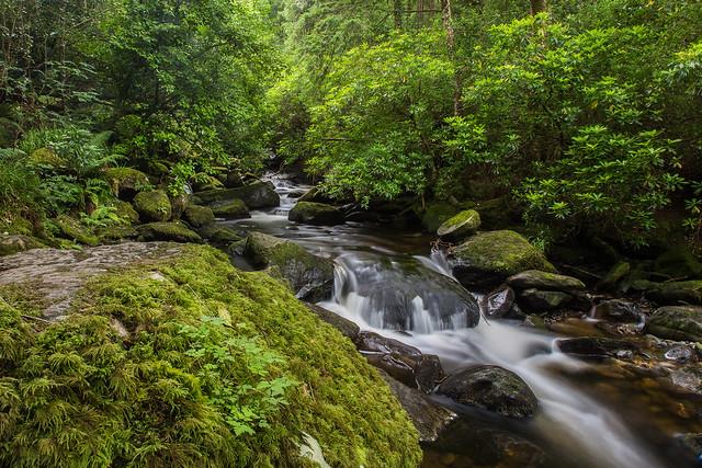Owengarriff River, Killarney national park, Ireland