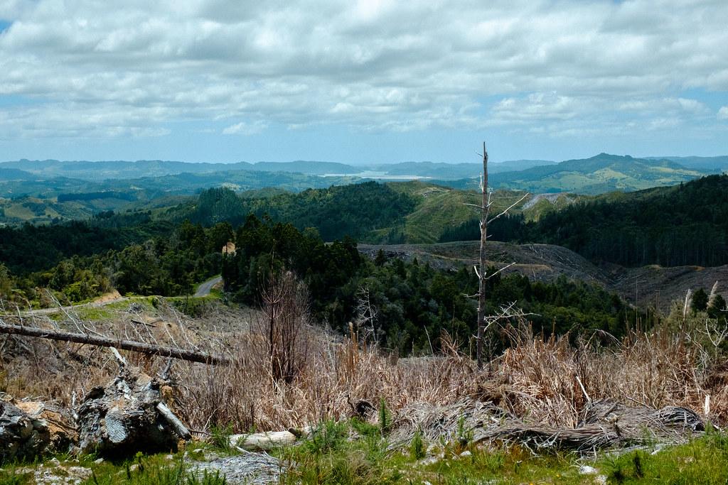 161213 Puketi Forest-15