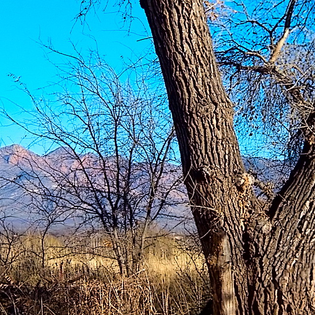 Mule Mountains / Cottonwood