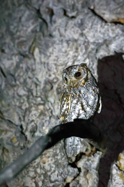 042416_owl11